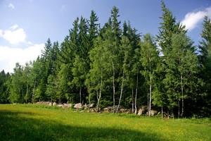 Wald, im Vordergrund Wiese