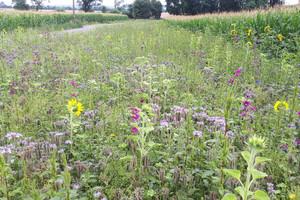 Wiese mit vielen blühenden Pflanzen