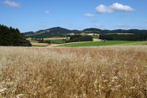 Getreidefeld mit hügeliger Landschaft im Hintergrund